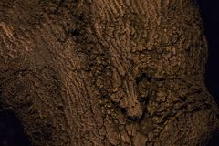 The bark of a tree is  in a night park Stock Images