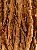 Bark  tree  oak Stock Images