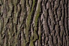 Bark, Tree, Oak, Old Oak, Bast Stock Images