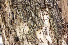 The bark of tree. Old and brown, wallpaper and background Stock Photos