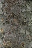 The bark of the tree. Stock Photo