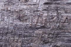 Bark of tree Royalty Free Stock Photos