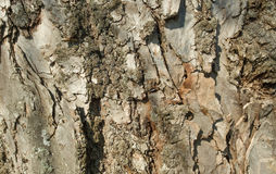 Bark Stock Images