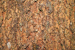 Bark Tree. Bark is the outermost layers of stems and roots of woody plants. Plants with bark include trees, woody vines, and shrubs. Bark refers to all the Stock Photos