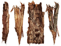 Bark tree set Stock Photo