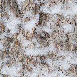 The bark of tree with snow Stock Photography