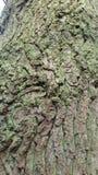 Bark of tree. Spring Stock Image