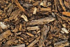 Bark tree texture Stock Photos