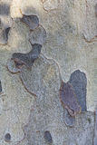 Bark of tree texture Stock Images