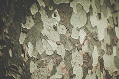 The bark of the tree Stock Photos