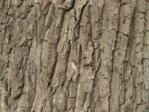 The bark of the tree Stock Photography