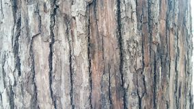 Bark of tree. Texture of tree Royalty Free Stock Images