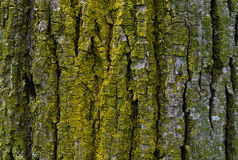 Bark of tree texture background Stock Images