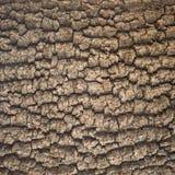 Bark tree texture Stock Photography