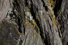 Bark tree texture. Bark tree background. Abstract texture and background for designers. Stock Image