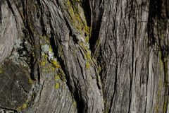 Bark tree texture. Bark tree background. Abstract texture and background for designers. Stock Photo