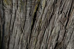 Bark tree texture. Bark tree background. Abstract texture and background for designers. Royalty Free Stock Image