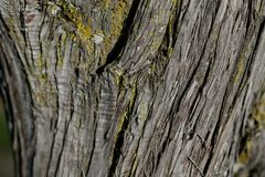 Bark tree texture. Bark tree background. Abstract texture and background for designers. Royalty Free Stock Photo