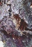 Bark Tree Texture background close-up stock image