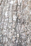 Bark of tree texture. Background photo detail bark of tree texture royalty free stock photography