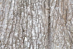Bark of tree texture. Background photo detail bark of tree texture stock photo