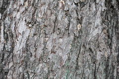 Bark of tree texture. Background photo detail bark of tree texture royalty free stock images