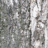 Bark of tree texture. Background photo detail bark of tree texture stock photography