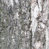 Bark of tree texture Stock Photography