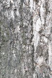 Bark of tree texture. Background photo detail bark of tree texture stock image