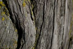 Bark tree texture. Bark tree background. Abstract texture and background for designers. Stock Photos