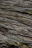 Bark tree texture. Bark tree background. Abstract texture and background for designers. Stock Photography