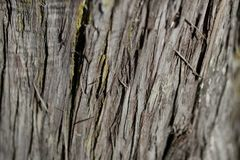Bark tree texture. Bark tree background. Abstract texture and background for designers. Royalty Free Stock Images