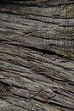 Bark tree texture. Bark tree background. Abstract texture and background for designers. Royalty Free Stock Photography