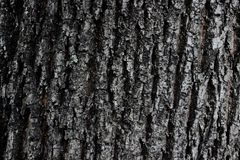 Bark of tree texture royalty free stock images