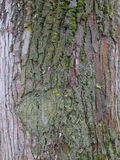 Bark of tree. Stock Photos