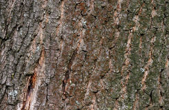 Bark of tree texture Stock Image
