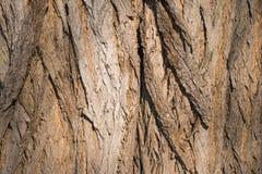 Bark tree texture close up photo with tree skin cracks. Stock Photos