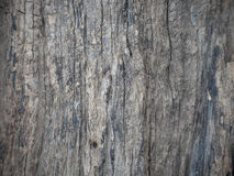 Bark of tree texture. Stock Photography