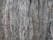 Bark of tree texture. Stock Image