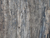 Bark of tree texture. Royalty Free Stock Photography