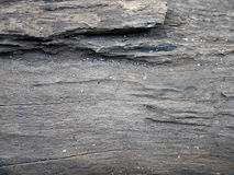 Bark of tree texture. Stock Images