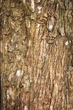 Bark Tree Royalty Free Stock Photo