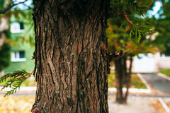 Bark Tree texture full frame in nature. Royalty Free Stock Photos