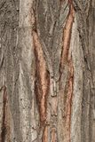Bark Tree texture full frame in nature Stock Photo