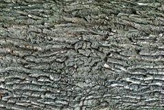 Bark of tree Stock Photo
