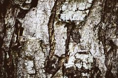 Bark tree. Texture, old, background, wooden, brown, nature, forest, pattern, natural, trunk, surface, timber, rough, abstract, photo, textured, material royalty free stock image
