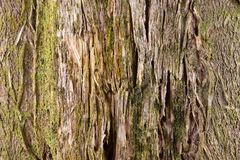 Bark of a tree texture pattern background stock photography