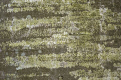The bark of the tree. Texture is pure the bark of a tree stock photos
