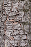 Bark tree texture - RAW format Stock Photo
