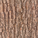 Bark tree texture Royalty Free Stock Image